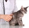 Ветеринарные клиники в Кургане